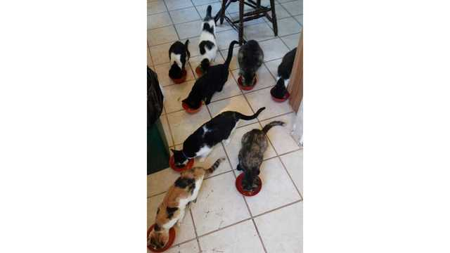 Callie, Patch, Snoopy, Midnight, Princess, Tatoo, Tigger, and Scooter 8-11_1514403580485.jpg.jpg