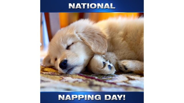 Dont Be Afraid To Doze Its National Napping Day